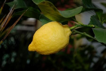 Mire jó a citrom